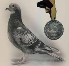 Risultati immagini per uso del piccione in guerra