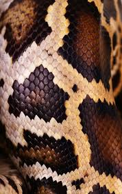 Python Pattern Fascinating Python Snake Skin And Scales Pattern Macro Stock Photo Colourbox
