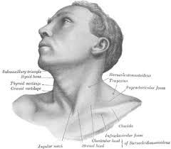 Resultado de imagem para DISTONIA CERVICAL