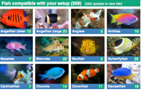 Saltwater Fish Compatibility Chart A Well Done Marine Compatibility Guide Aquarium Hobbyist Blog