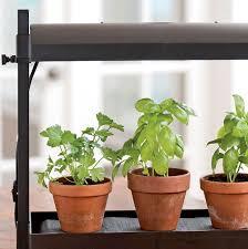 herbs growing under a grow light