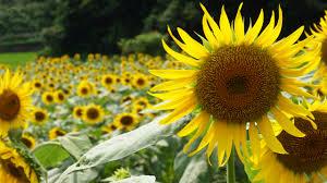 四季夏の無料壁紙夏の風景写真 高解像度高画質