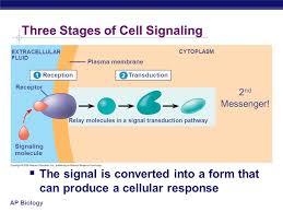 ap bio essay cell membrane << essay writing service ap bio essay cell membrane