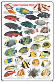 Australian Reef Fish Species Chart Fishcards Com Fishes And Invertebrates Page