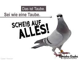 Sprüche Suche Taube Lustig Sprüche Facebook