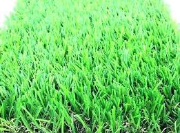 outdoor artificial turf green grass rug carpet home depot new rugs wonderful runner