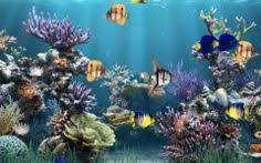animated aquarium wallpaper for windows 7 free. Contemporary Free Moving Desktop Backgrounds Windows 7 In Animated Aquarium Wallpaper For Free