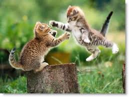 puppy and kitten fighting. Brilliant And Kittens Fighting Picture And Puppy Kitten