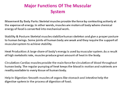 the muscular system by miriam cantu nayeli belmares ppt  major functions of the muscular system movement by body parts skeletal muscles provide the force