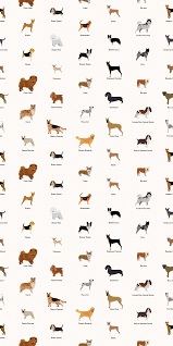 Dog Pattern Wallpaper - Feathr Wallpapers