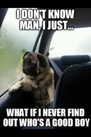 Sad Dog Meme I don't know man, I just…what if i... via Relatably.com