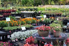 about casaplanta miami garden center