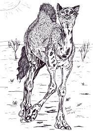 Tekening Van Een Dromedaris Getekend Door Brigit Weeda