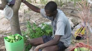 essay contest on achieving african food security launched farmers in the senegalese village of keur madaro are producing more crops the innovative super