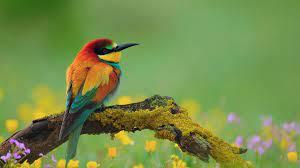 1920X1080 HD Birds Wallpapers - Top ...