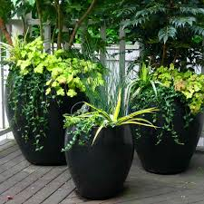 Small Picture Container Gardening Services in Seattle Seasonal Color Pots LLC