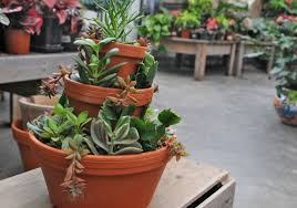 Succulents in stacked terra cotta planters