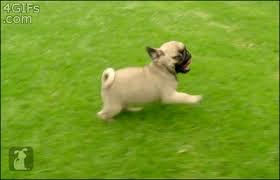 excited animal gif. Plain Gif Excited Animal Gif  Photo8 For Animal Gif I