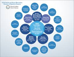 Organizational Chart Ucla Vatche Tamar Manoukian