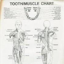 Kinesiology Muscle Chart 2010 76 Tooth Muscle Chart