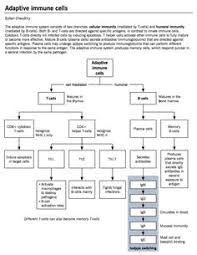Surprising Immune System Flowchart Worksheet Cells Of The