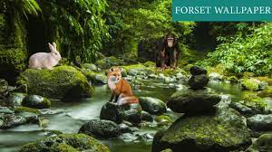 Forest 3D Live Wallpaper for Android ...