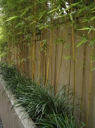 Small Picture Small Garden You Can Still Do Bamboo