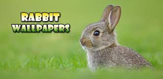 Rabbit Wallpaper - <b>Cute Rabbit</b> Wallpaper - التطبيقات على Google ...