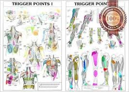 Details About New Trigger Points 1 2 Anatomical Diagram Chart Anatomy Print Premium Poster