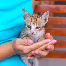 Pine Street Animal Hospital Cat Emergencies