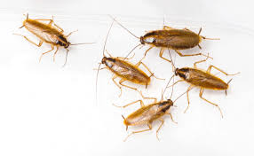 Small Brown Bugs In Kitchen Dogs First Line Of Defense Against 3 Most Destructive House Pests