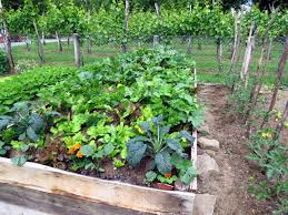Companion Planting Helps Garden Vegetables Grow Simplemost
