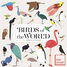 Amazon Pop Chart Lab Birds Of The World By Pop Chart Lab Wall Calendar 2020 Pop