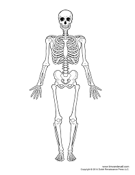 Small Picture Best 25 Human skeleton images ideas on Pinterest Human skeleton