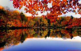 1280x800 Autumn Forest River Side ...