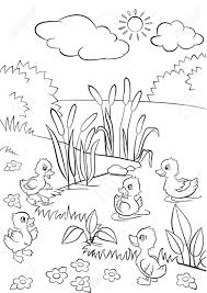 Small Picture Coloring Pages Five Little Cute Ducklings Swim On The Lake And