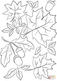Small Picture Autumn Leaves and Acorns coloring page Free Printable Coloring Pages
