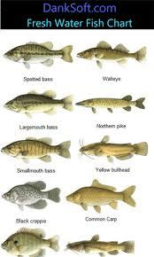 Freshwater Fish Chart Freshwater Fish Google Search Fish Aquaponics Fish