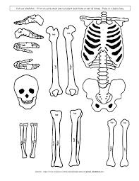 Best 25+ Human body crafts ideas on Pinterest   Human body crafts ...