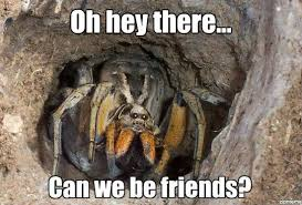 Friendly Spider Memes via Relatably.com