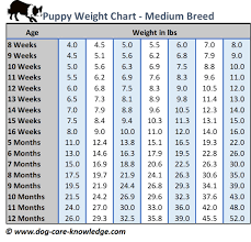 Dog Age Chart By Weight Puppy Weight Chart This Is How Big Your Dog Will Be