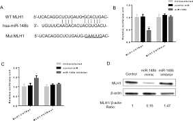 mirna b regulates radioresistance in non small lung cancer   figure