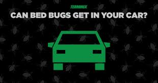 bed bugs can attach themselves to clothes furniture luggage and even your pets while rare they can also live in your car which gives them easy access