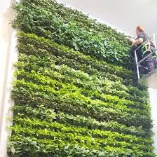office greenery. LIVING WALLS Office Greenery T