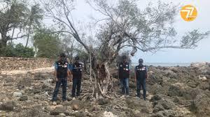 สุราษฎร์ธานี – คนสมุยเศร้าใจ!! ต้นเทียนทะเลถูกลักลอบตัดไปอีกแล้ว – GMOS