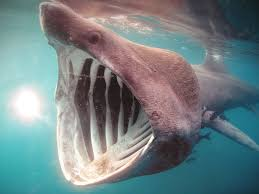 Image result for sharks eating people