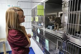 cats in animal shelters. Simple Shelters Animal Shelter Staff 5 For Cats In Animal Shelters T