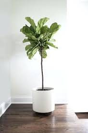 cool office plants. Cool Office Plants. Glamorous House Or Indoor Plants S O