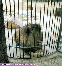 zoo animals in cages.  Animals The  In Zoo Animals Cages T