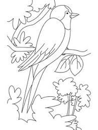 Small Picture A nightingale bird watching coloring page Download Free A